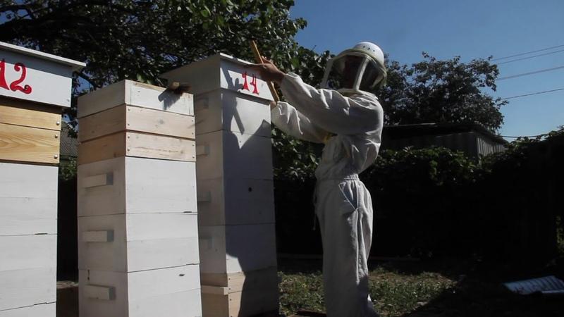 Улей Варре. Hive Warre - Обзор улья с пчелами