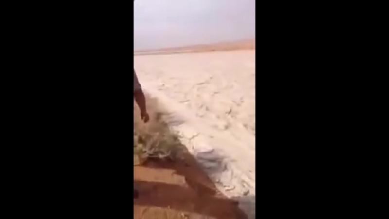 Песчаная река в Ираке