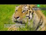 День тигра на Дальнем Востоке