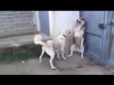 Типичная ЯжеМать! :D