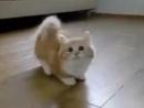 Котёнок танцует вальс...