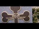 Киша задавила собаку Малкольма - Дом с паранормальными явлениями 2013 - Момент из фильма