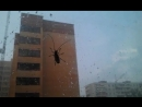 Гигантский жук на дом полез