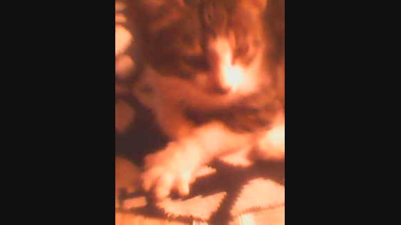 Кот обормот 2