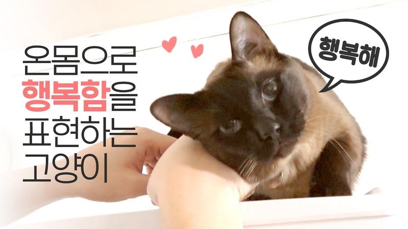 온몸으로 행복함을 표현하는 고양이   김메주와고양이들