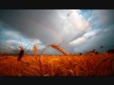 Башлачёв В чистом поле-дожди косые