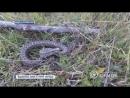 Будьте осторожны! Ядовитые змеи в черте города. В Донецке появились хлоднокровные убийцы.