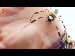 УКУСИТ ЛИ!؟ - ОГРОМНЫЙ КРУГОПРЯД.Ядовитый паук с самой большой паутиной.Brave Wilderness на русском