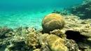 Красное море Таба, Египет (Red Sea Underwater, Taba, Egypt)