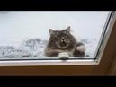 СМЕШНЫЕ КОТЫ ДО СЛЕЗ Прикольные видео с кисками и котиками Смешные кошки – МатроскинТВ