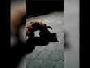 черная блядь