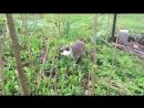 весенний рацион котейки