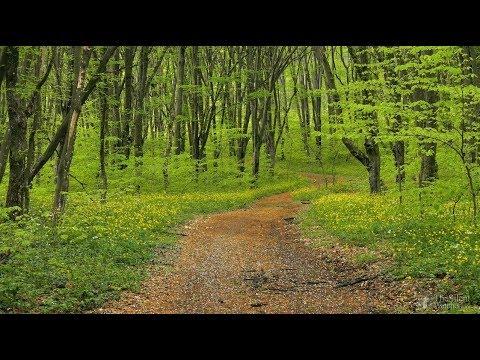 Bahar ve Orman Dinlendirici ve stresi alan kuş sesleri (3-saat)