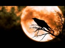 Bad Moon Rising - Peter Dreimanis