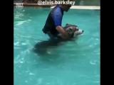 Песик плавает