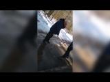 Малолетки избили мужчину с палочкой г. Кирово Чепецк. 12.04.2018