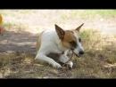 собака ищет хозяев