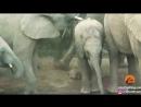 Черепаха чудом выжила после «нашествия» слонов