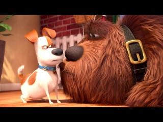 Тайная жизнь домашних животных / The Secret Life of Pets (мультик по ссылке)