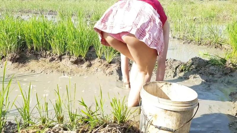 Net Fishing In Pailin Province 2018 - Khmer Net Fishing - Cambodia Traditional Fishing(Part 75)