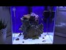 Бюджетный (Нано Риф) морской аквариум, засол аквариума Часть 2