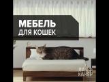 Специальная мебель для кошек