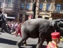 В день города, по городу слонов водили.