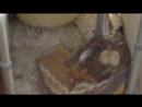 [День 8] - пока голубь улетел - ставим бордюр у нас на балконе для его птенцов чтобы не выпали
