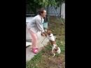 собака-ебака показав свои достоинства