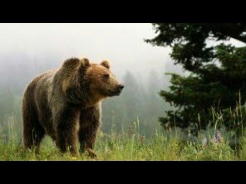 Дикая природа Аляски Документальные фильмы National Geographic HD
