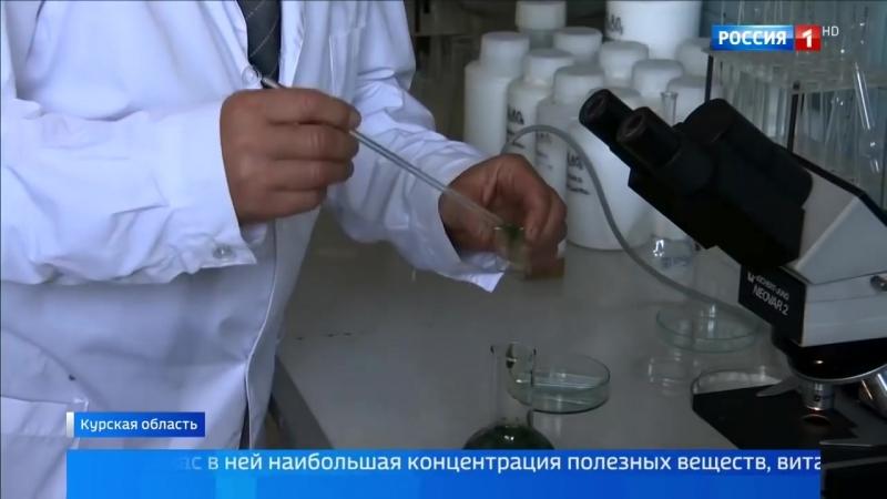 В Курской области начали выращивать спирулину на территории заброшенного колхоза