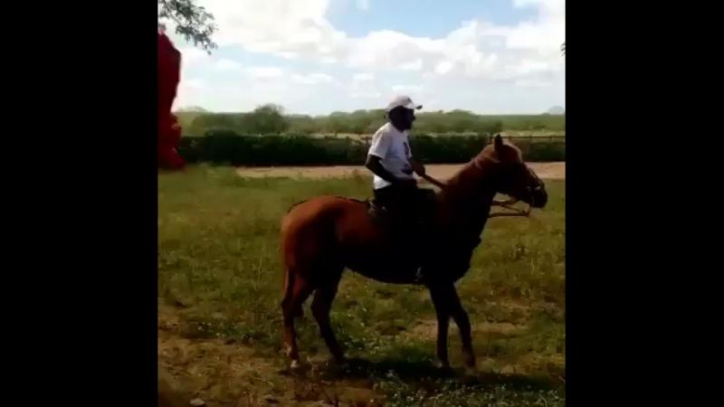 Вот это лошадь
