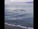 Дагомыс Beach Дельфины в поисках рыбы