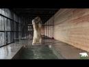 Медведица Хаарчаана  открыла купальный сезон
