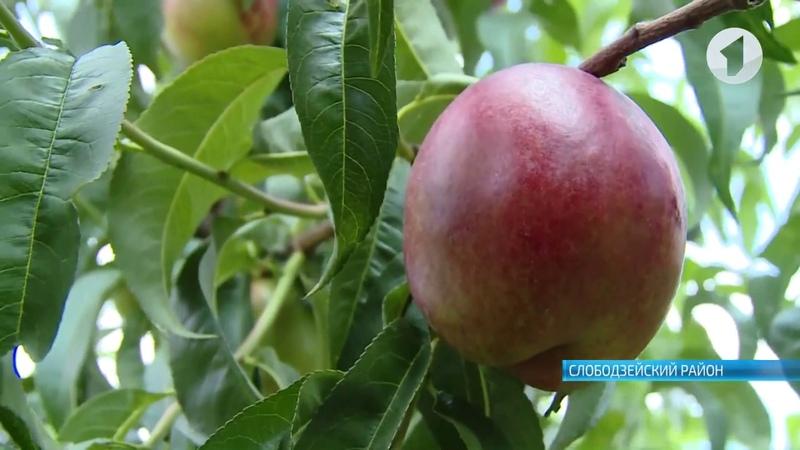 Европейское качество приднестровских фруктов