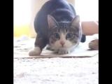 Trap cat (6 sec) (360p).mp4