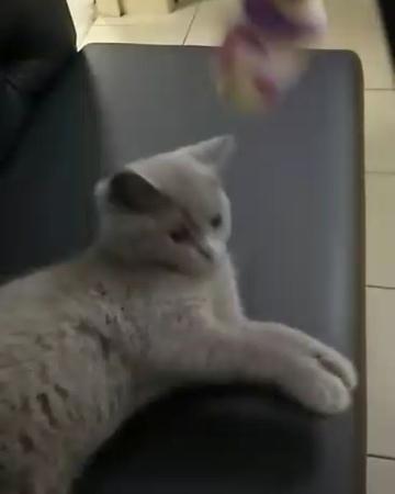 Maximilian_murashka video
