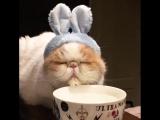 Когда очень хочется кофе поутру а ты ещё не проснулся 😋