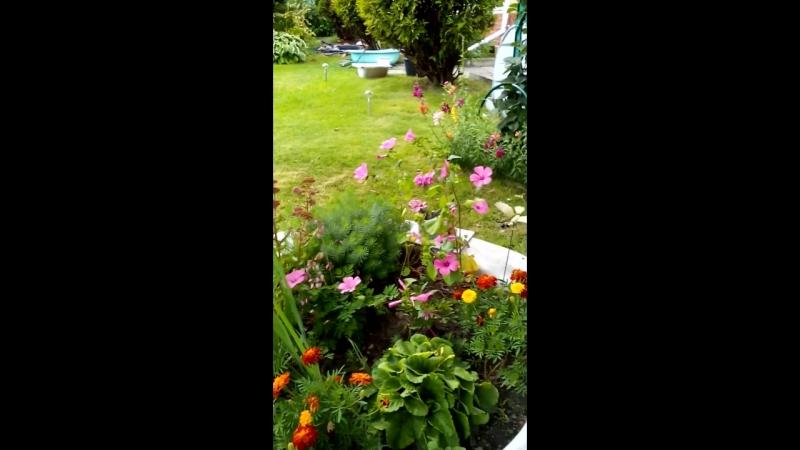 Красивая бабочка (муз. Г Портнова). Дачные цветы 🌸🌷2018🌺🌻🍀