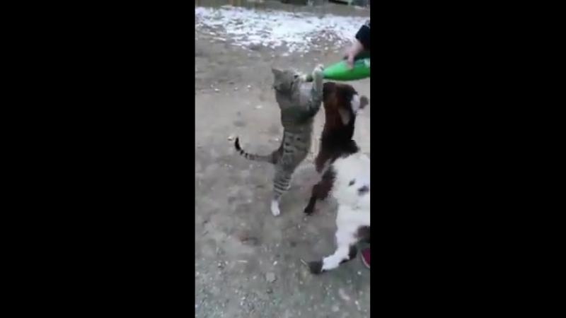 наглый кот
