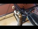 Кот прыгнул сквозь стеклянный стол Хозяева убрали стеклянную столешницу а кот не заметил и удивился
