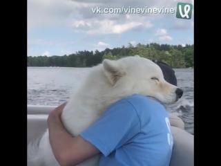 Обнимашки с собакеном