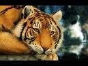♥Самое красивое видео!Смотреть всем!Живая природа.♥