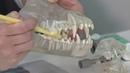 Профилактика зубного налета у собак и его возможные последствия
