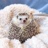 "Animals Lovers on Instagram Hypnotized by food 🤤 From @hedgehog azuki"""