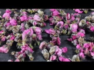 Персиковый чай 250 г первичной сельскохозяйственной продукции свежие натуральные цветочные почки сушеные цветочные почки могут б