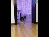 Пранк с котом