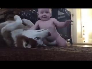 Малыш и собачка