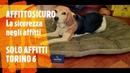 Affitto Sicuro - Solo Affitti Torino 6