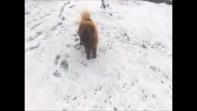 Приветик от Вишенки 9 месяцев дочке радуется первому снегу